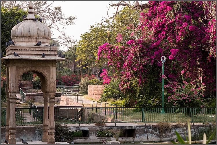 P1040010_Jodhpur environs Dec 2017