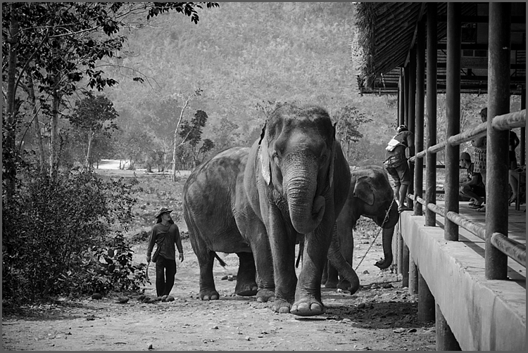 Elephant's World_0002