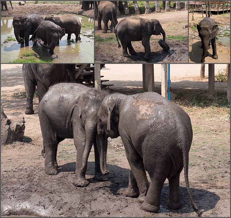 Elephant's World_0004