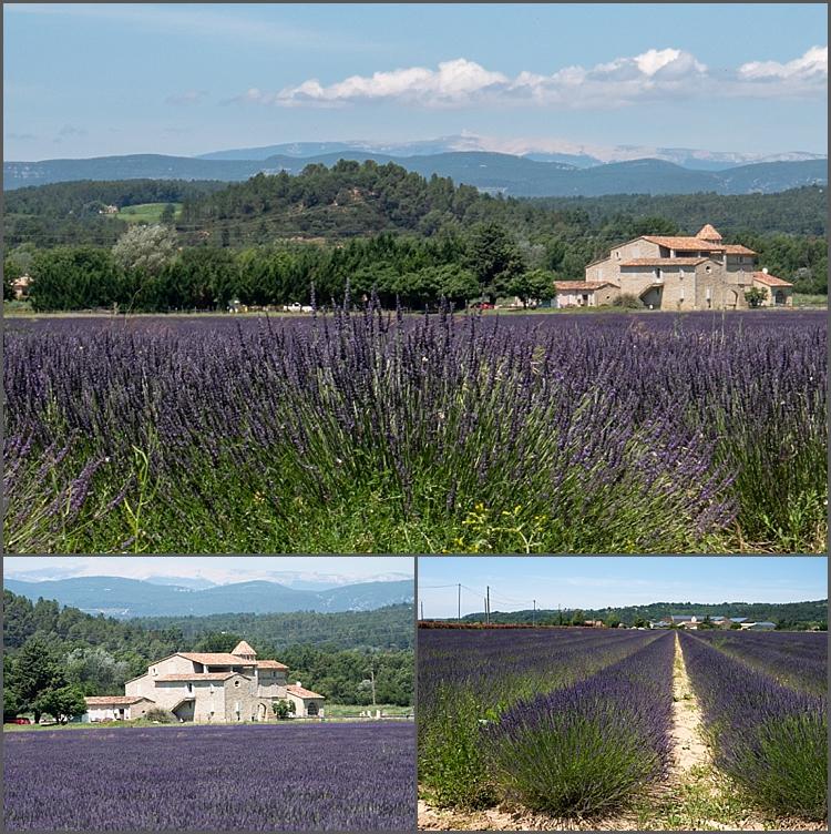 Provence June 2018_0012