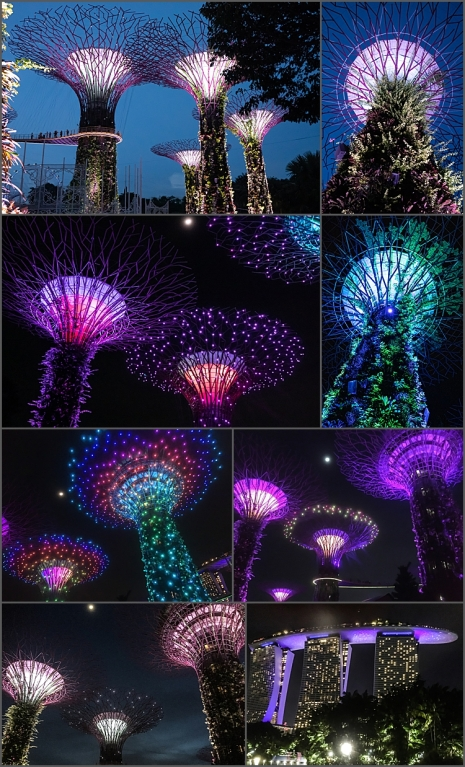 Supertree Grove, Singapore during the Light & Sound show.