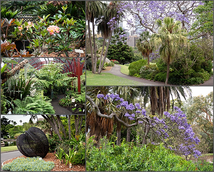 The Royal Botanic Garden, Sydney