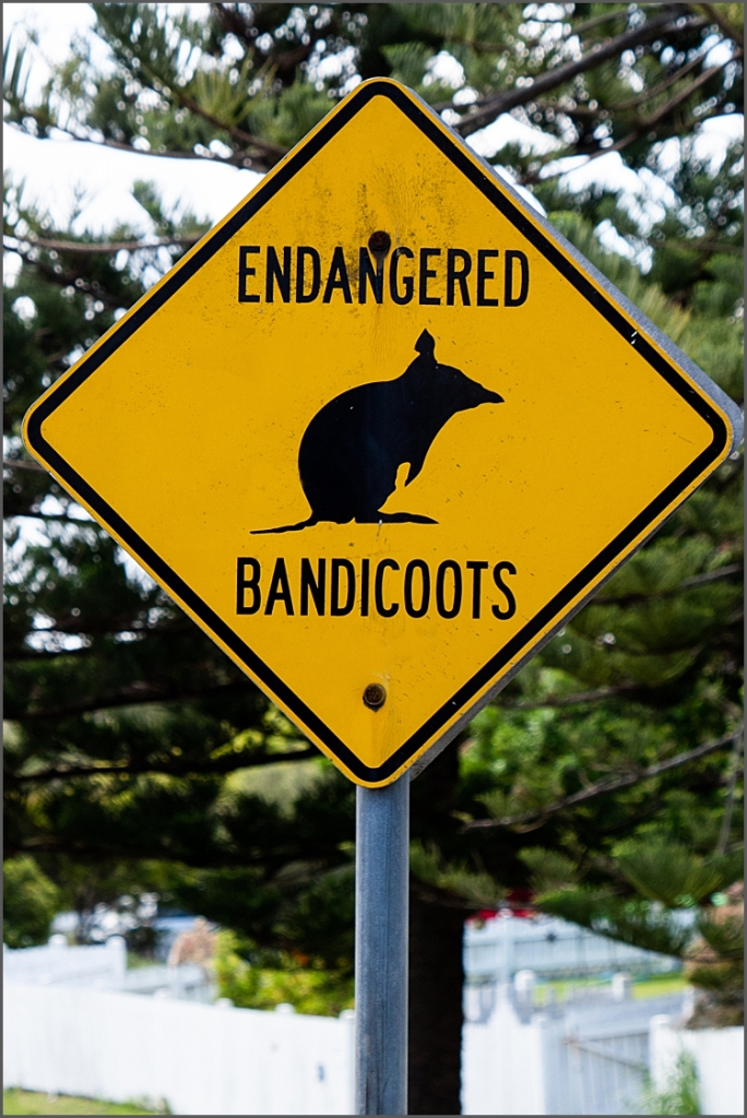 Sign for Bandicoots. NSW Australia