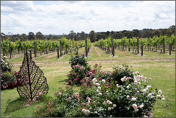 Stumpy Gully vineyard, Victoria