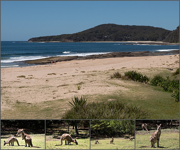Views of Pebbly Beach NSW