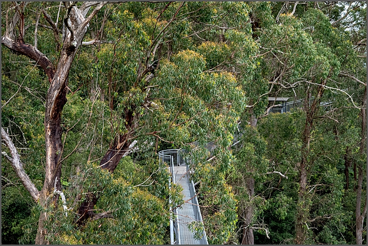 Part of the tree top walk taken from one of the lookout towers at Illawara Fly NSW.