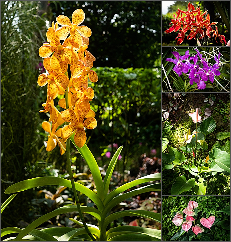 Orchids in The National Orchid Garden, Singapore.
